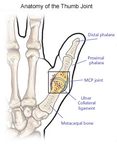 Thumb joint diagram